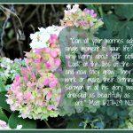 Mid-Week Encouragement: Worry
